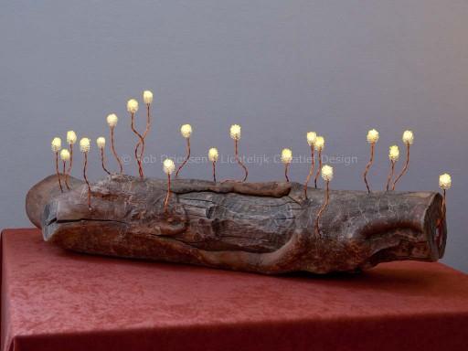 nieuw leven voor een boomstammetje drijfhout